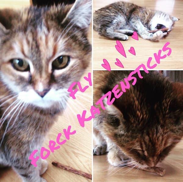 forck katzenminze erfahrungen