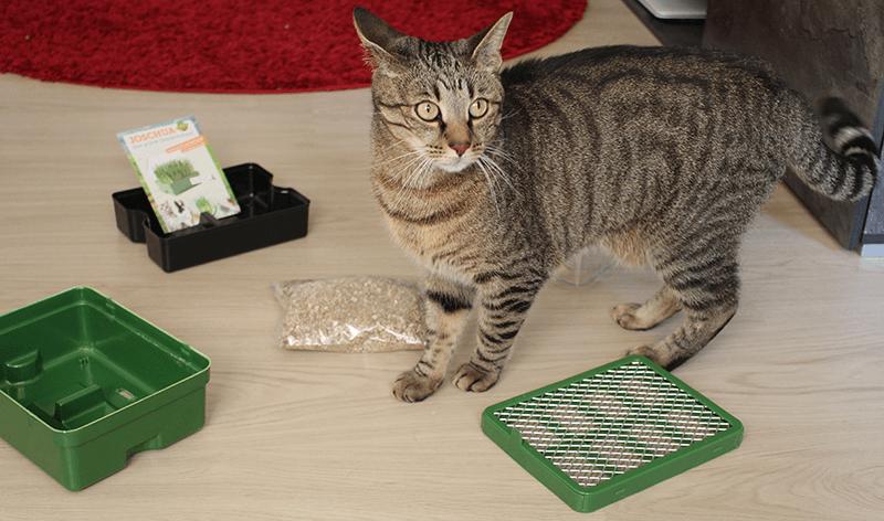 Joschua das grüne Gewächshaus Katzengras Test