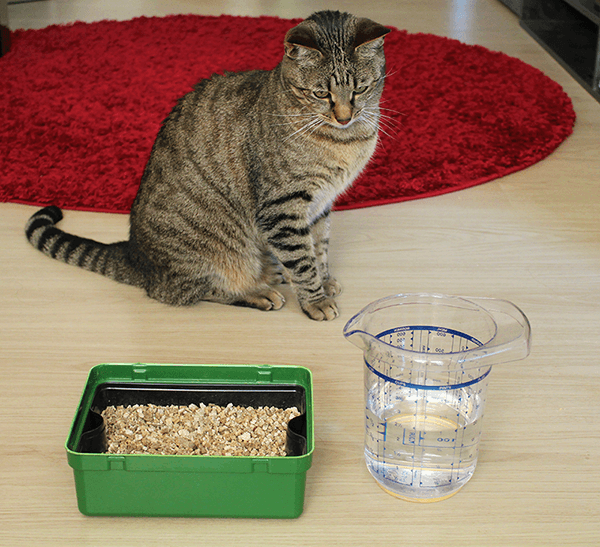 Joschua das grüne Gewächshaus Katzengras im Test