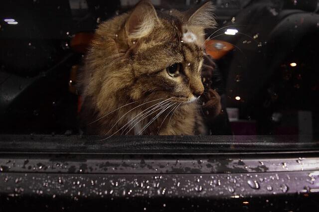 Katze alleine lassen