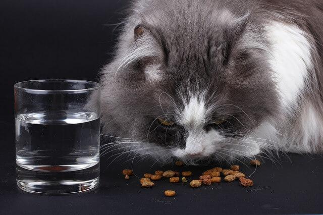 Katze trinkt nicht: Weg vom Trockenfutter!