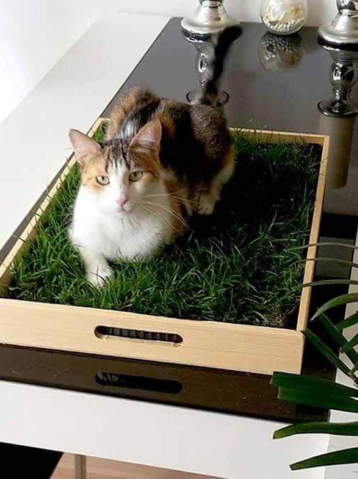 Katzengras pflegen