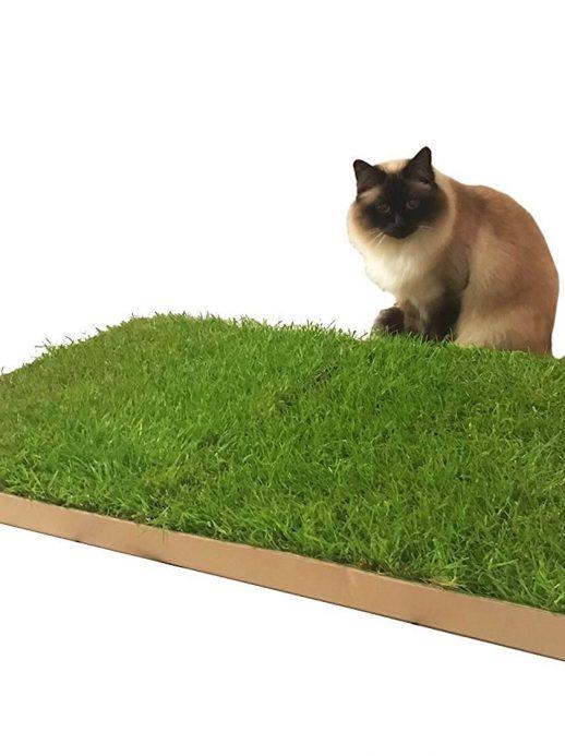 Katzengras Rasen