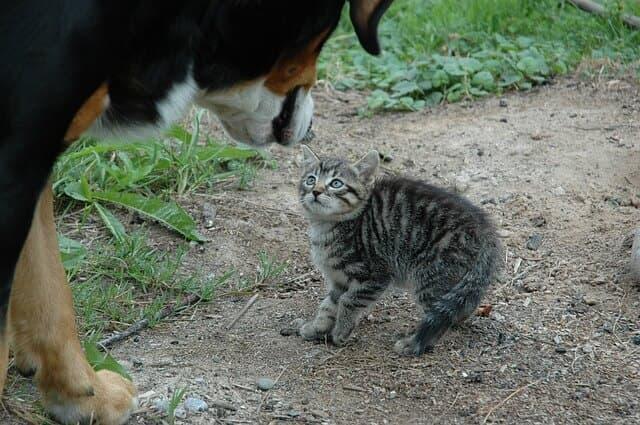 Katze Angst vor Hund