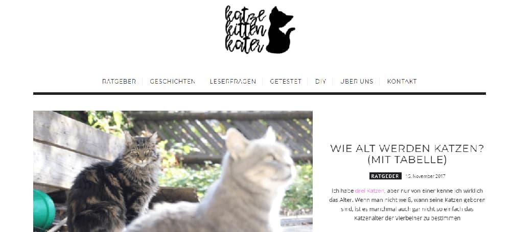 Katze kitten Kater katzenblog