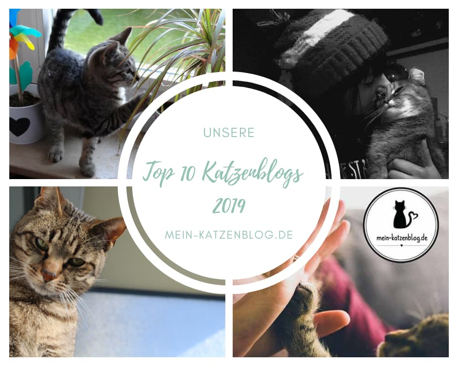 Beste Katzenblogs
