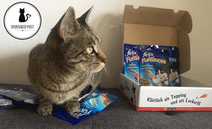 Katzen trockenfutter testsieger dating