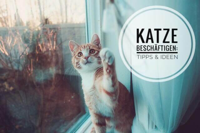 Katze Beschäftigen Top Ideen Spielzeug Für Wohnungskatzen 2019