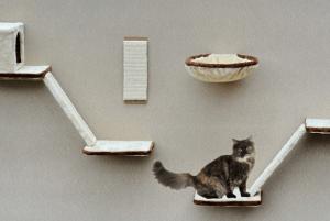 Katze beschäftigen