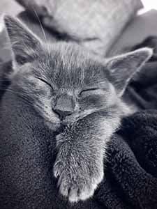 Katze Laune berücksichtigen