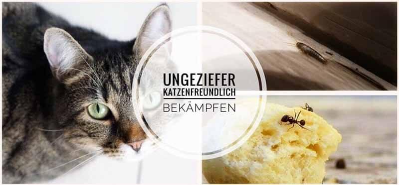 Katzen Im Haushalt Silberfische Ameisen Co Bekampfen 2019