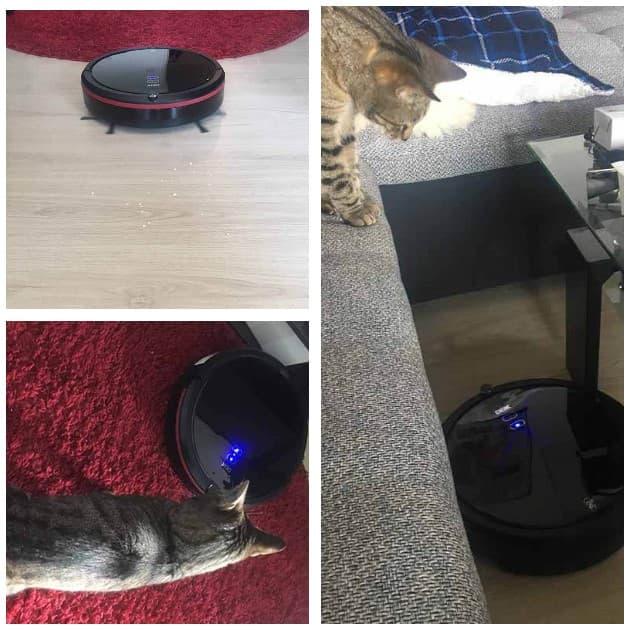 saugroboter für katzen test