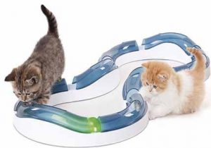 Katzen Geburtstagsgeschenk