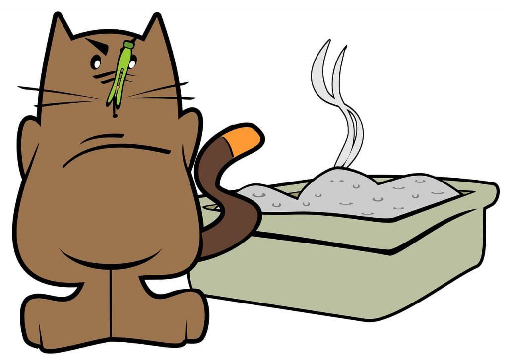 Katzenklo stinkt