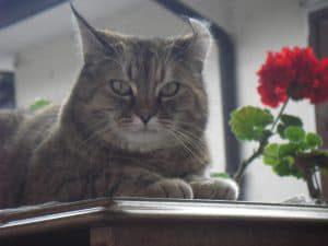 Fly von Mein katzenblog