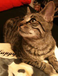 Tommy von mein Katzenblog