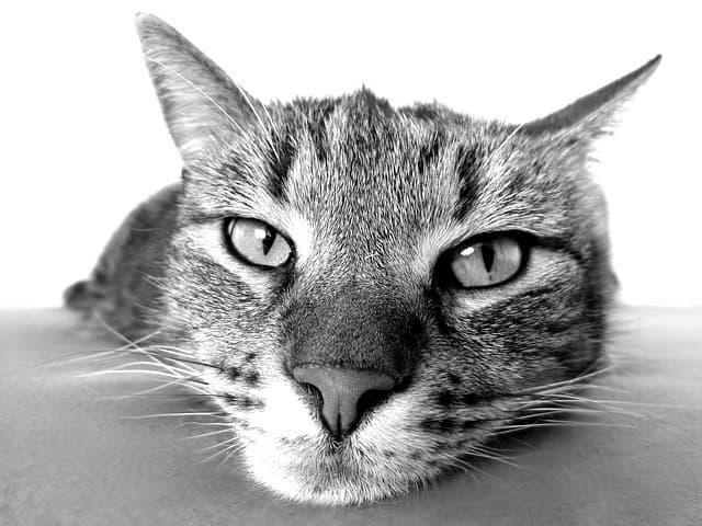 Alte Katze Immunsystem stärken