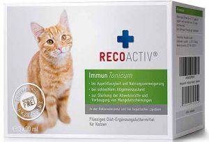 Katze Immunabwehr