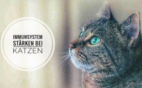 Katze Immunsystem stärken