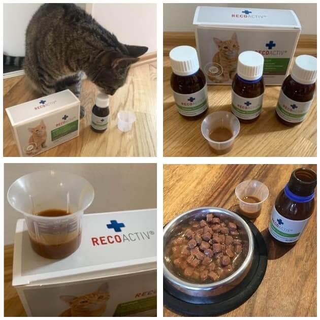 recoactiv immunkur katzen erfahrungen