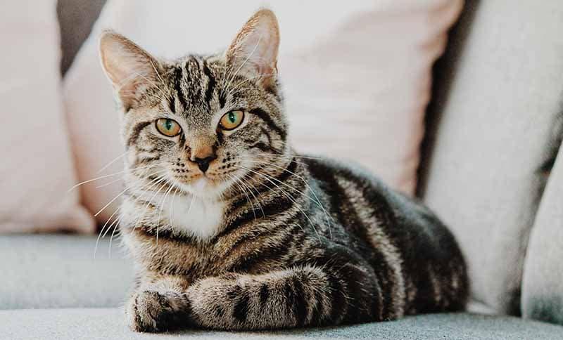 Die Schönsten Geschenke Für Katzen 2019 Ab 0 Katzenblog