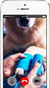 Dr Sam Online Tierarzt erfahrungen