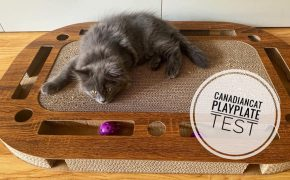 canadiancat playplate kratzbrett test