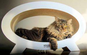 designer geschenk katzen