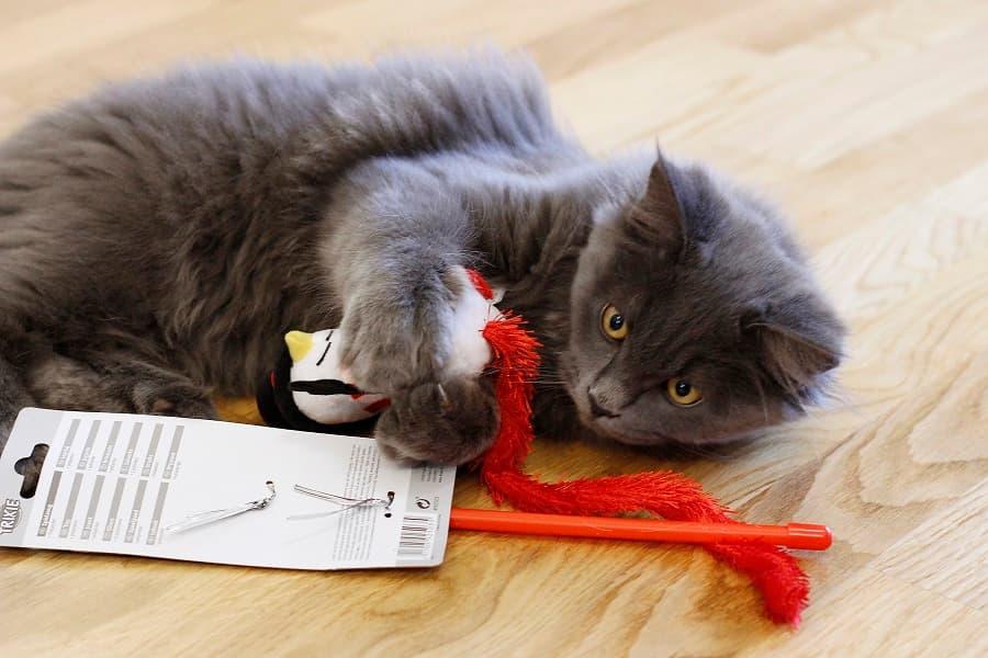 mein katzenblog testet schatzkiste