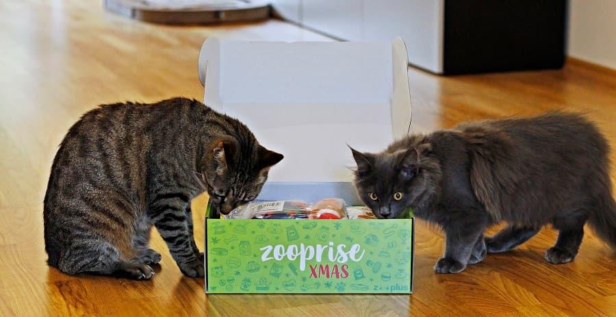 zooplus xmas superbox test