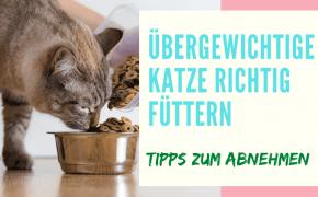 bergewichtige katze richtig füttern