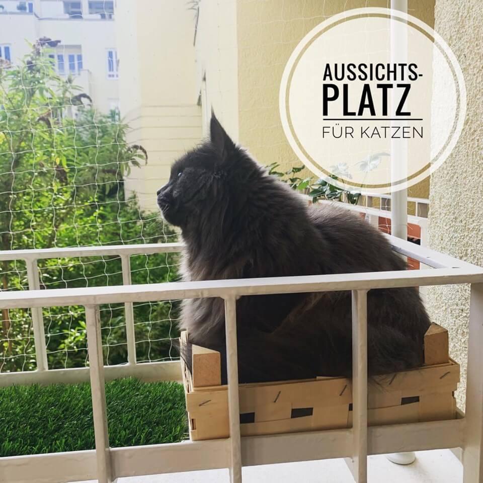 aussichtsplatz katze balkon