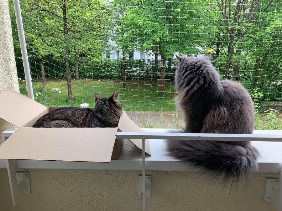 katze aussicht balkon