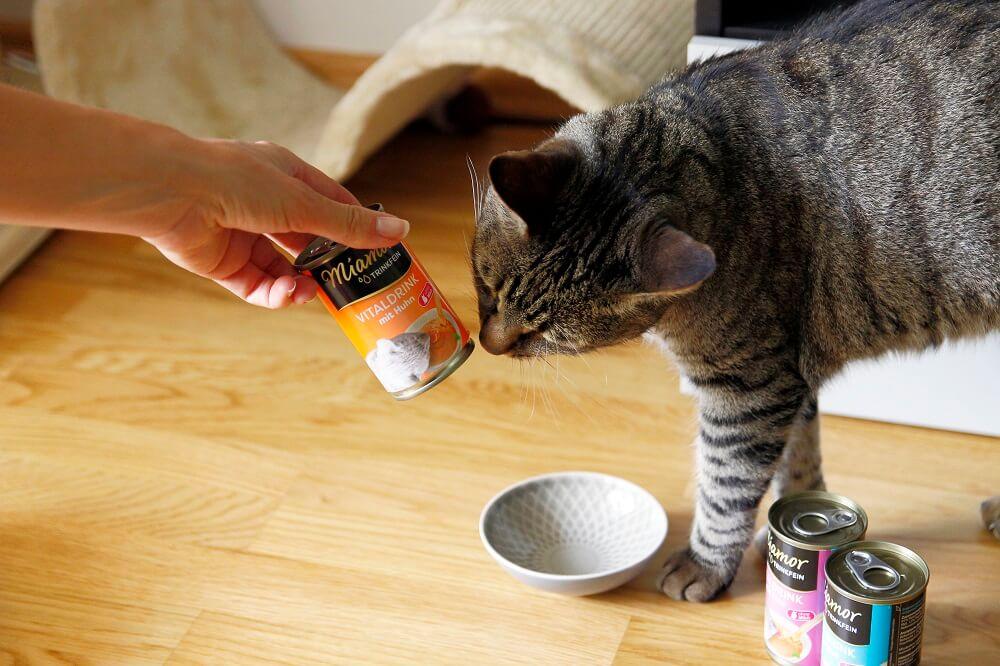 miamor katzendrink erfahrungen