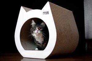 designer katzen geschenk