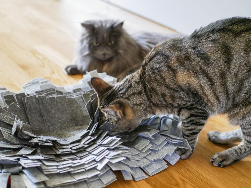 Suchspiele für Katzen