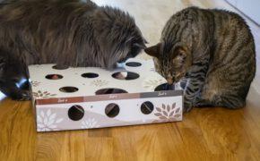 suchspiel magicbox katzen